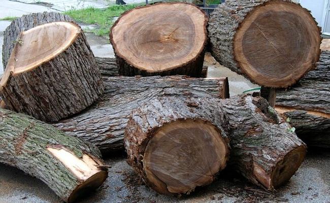 Báo giá gỗ lát chun