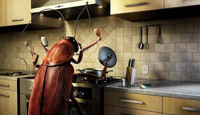 Cách diệt gián trong tủ bếp tận gốc vĩnh viễn